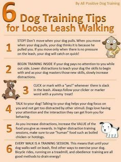 They ALL work! ~mgh | Dog Training Tips for Loose Leash Walking. For more reviews visit dogtraining-4gswc... http://www.bestdogobedienceideas.com/