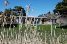 BJoeNNESSKOGEN-cabin Cabins, Vineyard, Flowers, Plants, Summer, Outdoor, Home, Modern, Outdoors