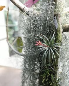 229 Best Air Plants A New Interest Images In 2020 Air Plants