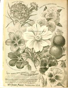 Maule's seed catalogue : 1895