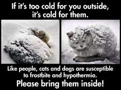 Something to remember with the cold weather. If it's too cold for you, it's too cold for our furry friends.