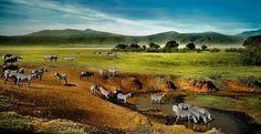 Beautiful morning in Ngorongoro