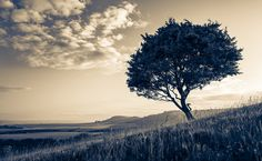 https://flic.kr/p/x2TuaC | Tree On A Hill | If you'd like me to check out your work/follow you - please leave a comment in the section below. Cheers