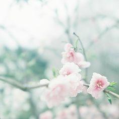 その他二眼レフカメラ - 安堵 -  flower  桜  ふてくされっと  Flexaret  - Camera Talk -