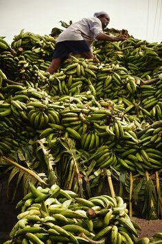 Bananas, Thrissur, Kerala, India | Rajesh Pamnani, The Banana Story