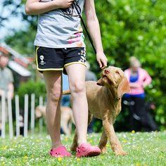 Actijoy (@actijoy) •  #dogtraining #dogtrainingtips #goodboy #goodgirl #puppy #puppytraining #dog #actijoy #dogs #dogshow #dogphoto #doglove
