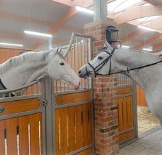 """6,171 gilla-markeringar, 51 kommentarer - Horses (@the.equine.world) på Instagram: """"™ 2 horses talking to each other! I wonder what they are talking about -•- Credit: @team_gornall!…"""""""