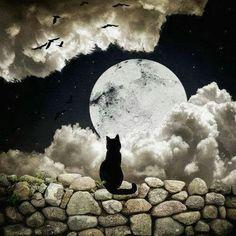 Kitty under the moon