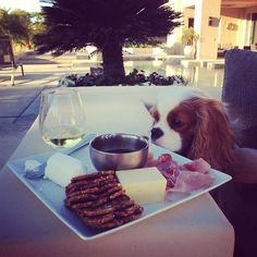 Cavalier King Charles ~ loving an afternoon Cheese Plate and Fine Wine ~ Finley