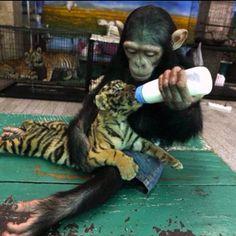 Unbiased love. #compassion