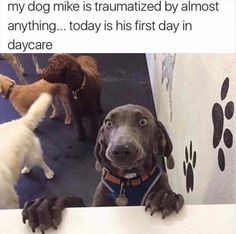 funny pics | animal pictures | dog | daycare