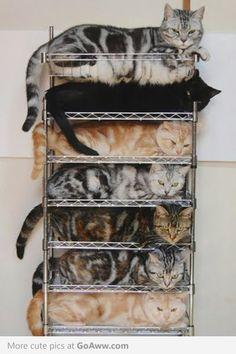 A los enamorados de los gatos como yo...pobrecitooooosss amontonados!! pero se ven re-bien!! ja ja