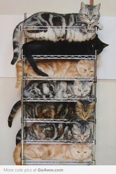 Kitten organization for the messy home.