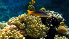 Coral Reefs (Dahab, Egipt) - opinie - TripAdvisor