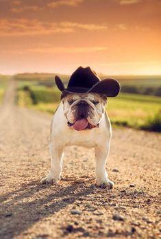 cowboy #Bulldog #Buldog