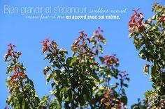 Marie Rosique / MR / Blog artistique: Grandir et s'épanouir...