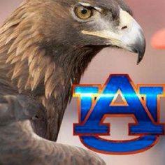 Our beloved Golden Eagle, Tiger!! War Eagle!!