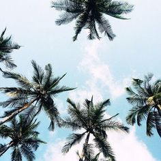 ideas photography summer vibes palm trees for 2019 Beach Aesthetic, Summer Aesthetic, Camping Aesthetic, Image Clipart, Art Clipart, Summer Goals, Summer Of Love, Summer Sky, Summer Beach