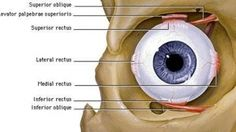 This Ingredient Increases Vision by Add it to Your Coffee or Food and See the Difference Cranial Nerves, Health Tips, The Cure, Medicine, Eyes Care, Blog, Nursing, Anatomy, Coffee