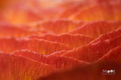 Wat is Macrofotografie - Moor Fotografie Photography Tips, Photo Tips