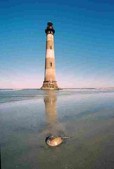 Morris Island Lighthouse, Folly Beach, SC - sight of my beach Wedding! Morris Island, Lighthouse Lighting, Lighthouse Pictures, Folly Beach, Light Of The World, Water Tower, Places To See, Beautiful Places, Scenery