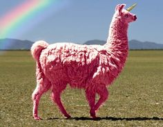 This is everything I love. Pink Lllama Unicorn.