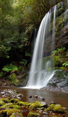 Hobart, Tasmania. Grab your camera and head through the beautiful Mount Field National Park to the famous three-tiered Russell Falls, a stunning national treasure.