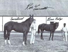 Secretariat and Riva Ridge Like at the difference in size!