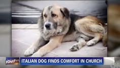 Tommy the dog went to mass with his human when she was alive, but now he comes down and sits quietly during mass even after her death.