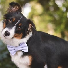 What did we do to deserve dogs? Perfect in Pastel bowtie from @snapindogbows!