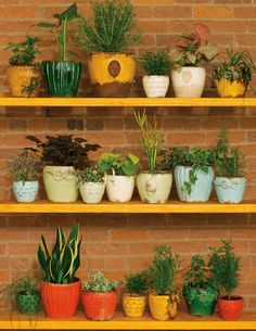 pots and plants