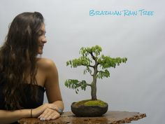 Special one of a kind bonsai trees in a one of a kind custom hand made bonsai pot just for you. Wonder Art, Wonders Of The World, House Plants, Miami, Rain, Tropical, Bonsai Trees, Terrariums, Stone