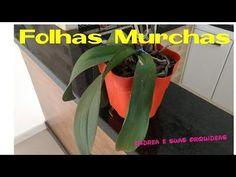 Folhas murchas em orquídeas | Andréa e suas orquídeas - YouTube