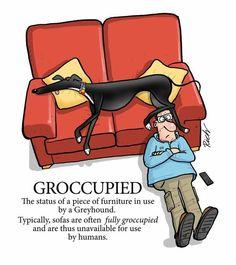 Greyhounds being greyhounds.