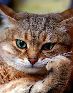 Un gato que piensa, esto en la tele no se consigue.