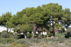 La VILLA LLOBETS I se encuentra rodeada de bosque mediterráneo. (Mallorca)
