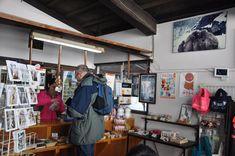 Snow Monkeys in Japan: Ultimate Guide for Visiting Jigokudani Snow Monkey Park Monkey Park Japan, Snow Monkey Park, Snow Monkeys Japan