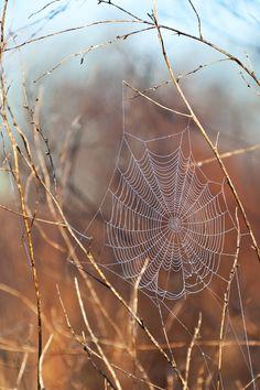 dew-covered-spider-web-2.jpg (2832×4256)