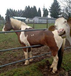 Die lustigsten Tier-Photobomber aller Zeiten |