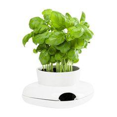 Found it at Wayfair.co.uk - Herbs/Spices Round Pot Planter