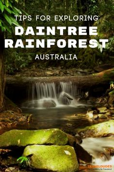 A guide to the best things to do in and around Daintree Rainforest in Australia. Explore Cape Tribulation, where the forest meets the Great Barrier Reef, look for wildlife on a nocturnal tour, hike through the national park on foot and so much more. Adventure travel in Australia. | Travel Dudes Travel Community #Australia