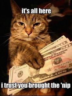 Sometimes cat really do some funny stupid things, so for all cat lovers, we have some good news. Here are some most Funniest Cat pictures and cat memes I hope you will like them ! Humor Animal, Funny Animal Quotes, Cat Quotes, Cute Funny Animals, Cute Baby Animals, Funny Cute, Cute Cats, Hilarious, Funny Pics