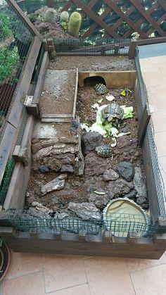 Terraio tartarughe
