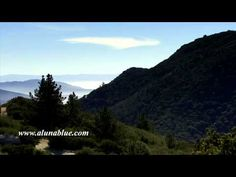 Pine trees watch over mist in the California mountains.     Purchase this clip from A Luna Blue:   http://www.alunablue.com/nature-stock-footage/forest/forest-02/clip-07.html     A Luna Blue Stock Video.   Imagery for Your Imagination.   http://www.alunablue.com