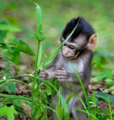 adorable baby monkey - true play doesn't require much whether you're a monkey or a human Baby Animals, Funny Animals, Cute Animals, Wild Animals, Tiny Monkey, Wildlife Day, Little Monkeys, Primates, Funny Animal Pictures