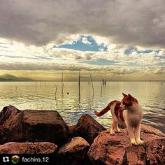 #Repost @fachiro.12  #trasimenolake #trasimeno #naturelovers #nature #paesaggio #landscape_lovers #landscape #view #volgoumbria #loves_united_umbria #loves_united_perugia #photography #pic #igersitalia #ig_captures #ig_masterpiece #igers #umbria #autumn #scenery #outdoors #amazing #cats #lake #total_italy #visititalia #loves_umbria #pointofview