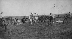 A cattle roundup in