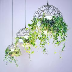 Who likes this lighting by Atelier Schroeter? Above kitchen sink? Indoor Plant Wall, Indoor Plants, Air Plants, Plant Lighting, Chandelier Lighting, Chandelier Ideas, Elise Franck, Dining Pendant, Hanging Light Fixtures