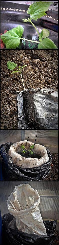 Огурцы в мешках