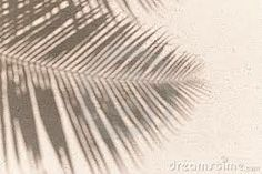 shadows of palms leaves - Google Search